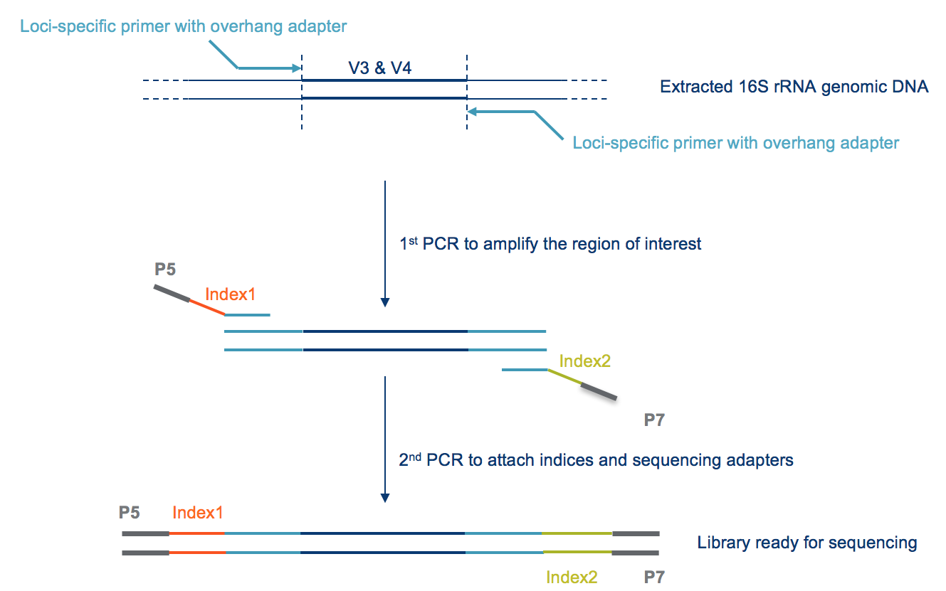 art190 mh 16s primers_fig2?sfvrsn=e9523607_4 strategies for microbiome sequencing analysis