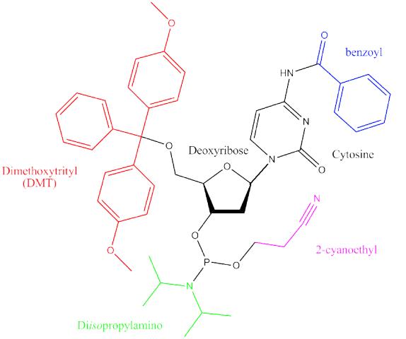 art84-CC-oligo syn-Fig1