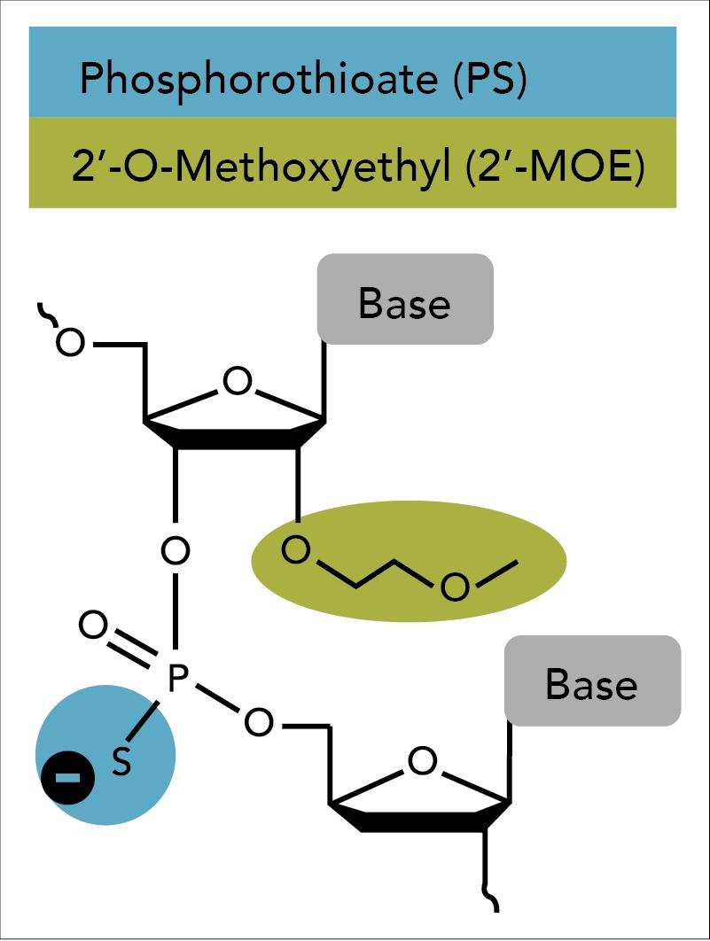 D-OLI18PS-MOE-Fig1