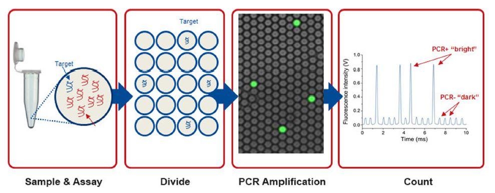 D3.4-CC-dPCR Fig1